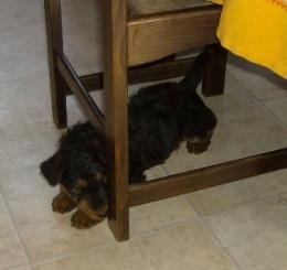 Ikke? Onder een stoel?