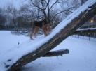 Op mijn boom is er ook van dat spul!!