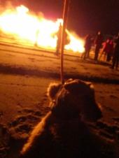 tree fire 9