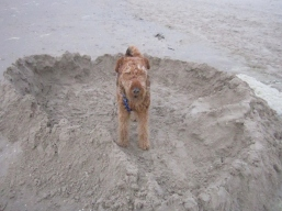 Euh, mum, think it's a bit sandy here...
