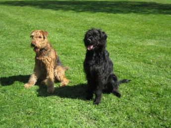 Meet me and labradoodle Mambo, I mean: meet Mambo and me!