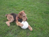 ball 11