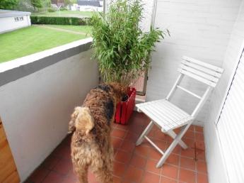 Bamboo is growing!
