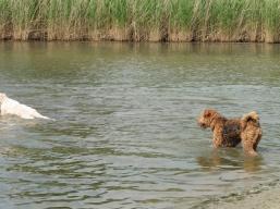 I still don't swim!