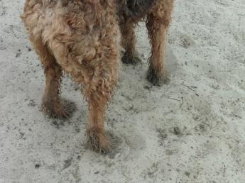 Sandy paws!