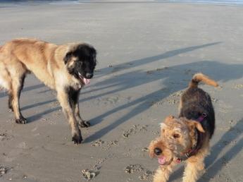 Two happy doggies!