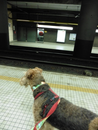 Waiting for metro to come