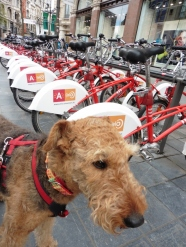 City bikes... I don't do that, neither does mum