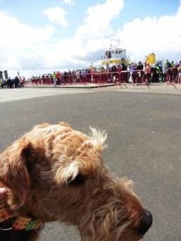 You see the big ferry and how many humans want to go running the 10 miles?